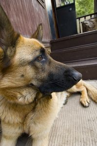 The Best Way to Clean Dog Urine on Carpets