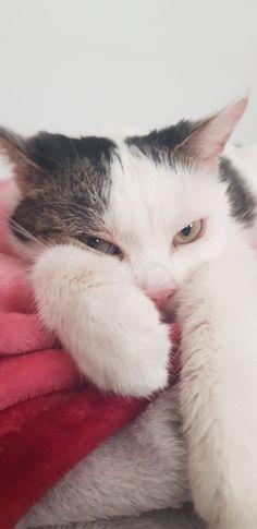 Das Schnurren einer Katze wirkt sich unter anderem positiv auf Körper, Geist und Seele des Menschen aus. Durch das Vibrieren des Katzenkörpers entspannt sich der eigene Körper schneller. Außerdem lügen oder betrügen sie nicht. Sie geben mehr zurück, als sie nehmen. <3 Cats, Animals, Counseling Psychology, Weird, People, Animales, Gatos, Animaux, Animal