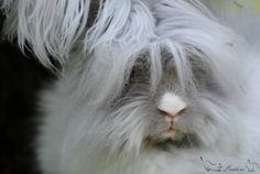 Cute bunny #animal #pet #bunny #rabbit #cute Discover other photos of Fluffy , HERE ==> http://www.yummypets.com/pic/2256032
