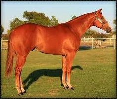 AQHA cuarter milla horse