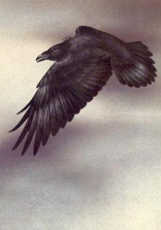 Quoth The Raven, Edgar Allen Poe, Magpie, Birds, Crows, Ravens, Alchemy, Corner, Animals