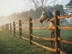 Google Image Result for http://imgc.allpostersimages.com/images/P-473-488-90/27/2707/JO1ND00Z/posters/richard-nowitz-a-horse-watches-the-mist-roll-in-over-the-fields.jpg