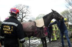 Firefighters and emergency crews rescue needy horses