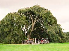 under a tree ceremony