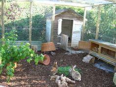 Romslig kaningård som også er sikret mot angrep ovenfra.