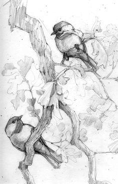 Carolina Chickadees in Post Oak, drawn in my backyard in Norman, Oklahoma, USA. by Debby Kaspari Bird Line Drawing, Bird Drawings, Animal Drawings, Pencil Drawings, Drawing Birds, Pencil Art, Animal Sketches, Drawing Sketches, Sketching