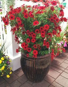 Make This Awesome Petunia Planter!