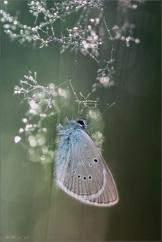 Small Blue by Wil Mijer