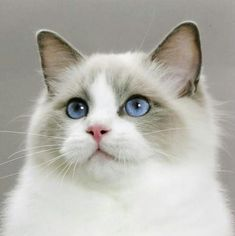 beautiful cat http://dogtraining-hs9z6v3j.yourreputablereviews.com