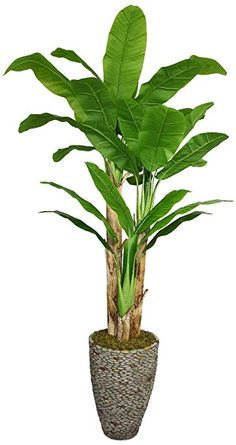 Laura Ashley 86 Inch Tall Banana Tree with Real Touch Leaves in 16 Inch Fiberstone Planter