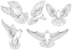 how to draw pigeons step 3