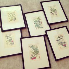 framed botanical prints as inexpensive art