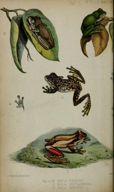 Proceedings of the Zoological Society of London, 1863.