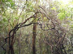 Amazonia - Igarape by Claudia Duarte