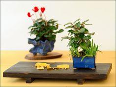 Kusamono | Tenji No Bonsai 2011 | Flickr - Photo Sharing!