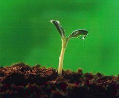 Starting Seeds at Home - a Deeper Look | Terroir Seeds