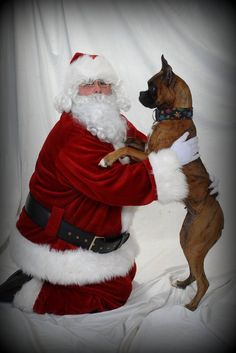 Santa Claus pictured with a Boxer . Christmas Boxers, Christmas Dog, Boxer And Baby, Boxer Love, Baby Puppies, Christmas Animals, Dog Paws, Christmas Pictures, Animal Photography