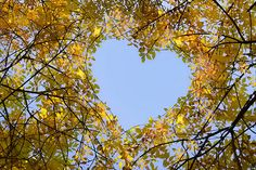 Blue sky heart.  Golden leaves.