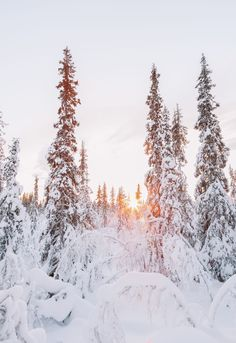 12 Best Things to Do in Lapland, Finland Places To Travel, Places To Visit, Stuff To Do, Things To Do, Finland Travel, Winter Magic, Winter Snow, Wanderlust, Photos Voyages