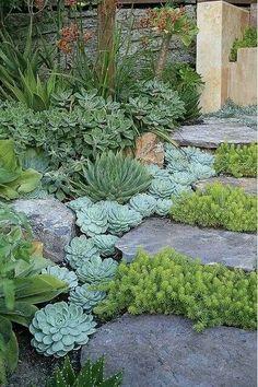 Lovely succulent garden