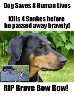 Real hero...