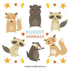 Pack of hand drawn cute forest animals Free Vector