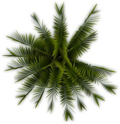 palm tree top png - Google Search