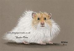 Image result for hamster portrait