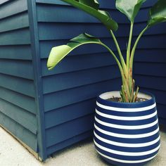 Indoor Flower Pots, Earth Design, Garden Pots, Potted Plants, Garden Design, Planter Pots, Home And Garden, Pottery, Flowers