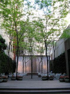 Honey Locust in Paley Park - modern - landscape - new york - Becky Harris