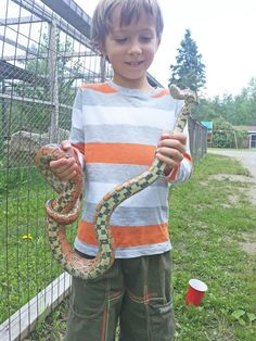 Theo wild about snakes Here he's holding a corn snake