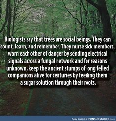 "~ German forest ranger Peter Wohlleben says trees are social beings, interconnected thanks to a natural network. He wrote ""The Hidden Life of Trees"" The More You Know, Good To Know, Did You Know, The Words, Save Our Earth, Wtf Fun Facts, Random Facts, Random Stuff, Funny Facts"