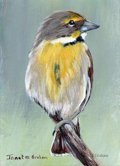 Dickcissel ACEO Bird Wildlife Original Bird ACEO Acrylic Painting