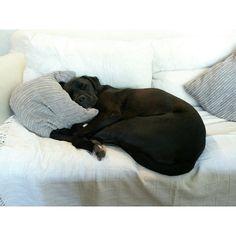 Emma Philip designer - My dog Bentley in dreamland
