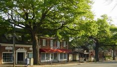Franklin Street in Chapel Hill, NC - so many great little coffee shops, bookstores, and restaurants