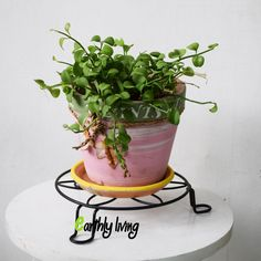 Black Vintage Flower design Wrought Iron plant pot 20 cm diameter Garden Stand   #EarthlyLiving