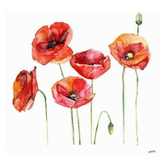 Marmont Hill Poppy Field Painting Wall Art Print - MH-RACBYL-31-C-18