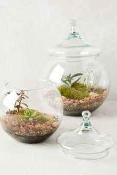 Anthropologie Glass Garden Terrarium #anthrofave #anthropologie