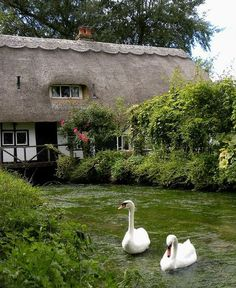 cottage with swans