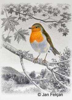 Jan Fekjan: Rødstrupe Living Room Art, Giclee Print, Fine Art, Bird, Prints, Artist, Painting, Animals, Animales