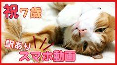 茶トラ猫「マック」7歳になっても甘えん坊の猫!スマホ動画 (訳あり) - Cute Cat Mac of the spoiled child, ...