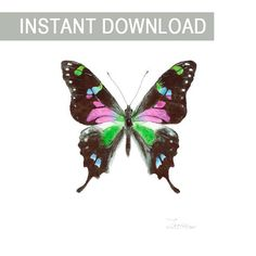 Watercolor multicolor butterfly Graphium weiskei. JPG downable and printable wall art. Aquarelle realistic hand painting high resolution digital file