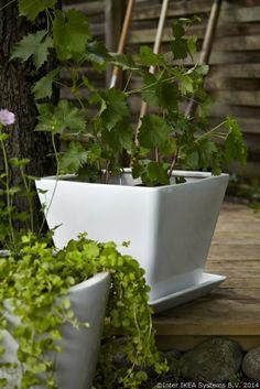 O plantă verde = energie și bună-dispoziție.