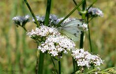Mein erster Schmetterling by meyer werner  on 500px