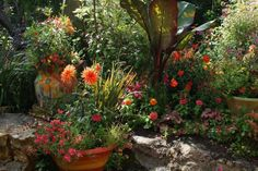Open Days Program Garden Tour - San Francisco East Bay Albany, CA #Kids #Events