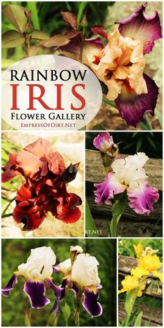 We Think Each of These Beautiful Varieties of Iris Deserves A Designated Spot In The Garden. For Ways To Mark Plants, Visit http://www.kincaidplantmarkers.com/.