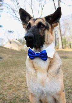 Dog Cat Pet Bow Tie Bowtie Satin Wedding Formal Black by dusidog, $7.00
