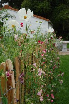 Diy Garden Flower – Garden & Tips Cottage Garden Plants, Garden Planters, Fruit Garden, Balcony Garden, Design Jardin, Dream Garden, Garden Planning, Amazing Gardens, Garden Inspiration