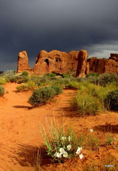 ~ Arches National Park ~ Utah....It looks like a resting camel....