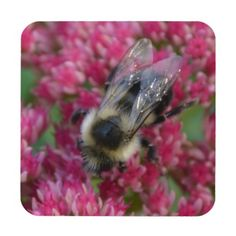 Keep your table protected with Bee coasters from Zazzle! Discover an amazing range of designs for any occasion or personalize with your own photos and text. Beverages, Drinks, Drink Coasters, Bee, Amazing, Animals, Design, Drinking, Honey Bees